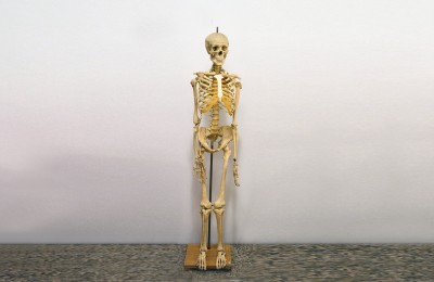 Didactical skeleton by Paravia 60s natural height